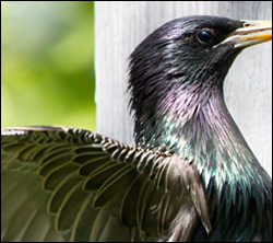 bird removal Euless