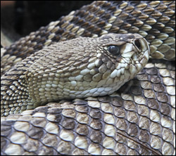 snake removal Euless